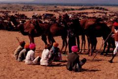 Camel Festival in India