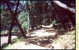 Lake Lagunitas Four Corners trails
