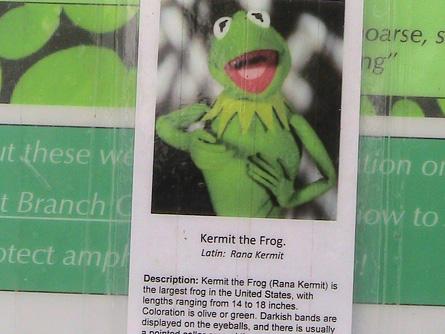 Kermit the Frog indigenous species of Wisconsin
