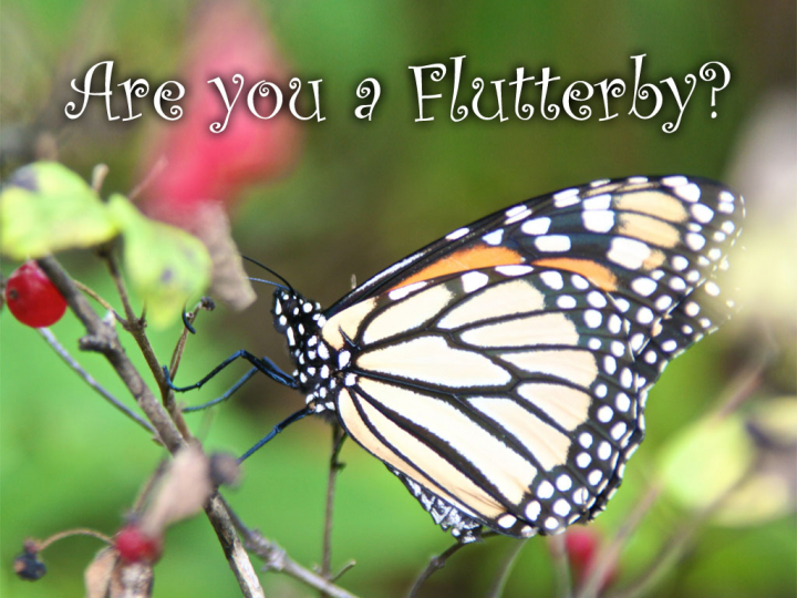Are you a flutterby or a butterfly? Don't let life pass you by.