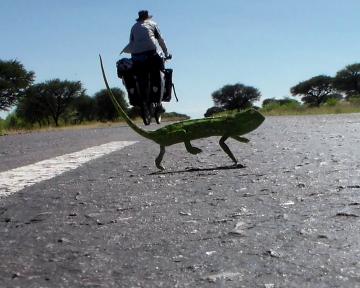 Chameleon encounter