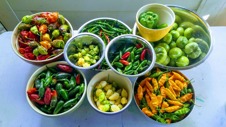 Garden harvest peppers and tomatoes