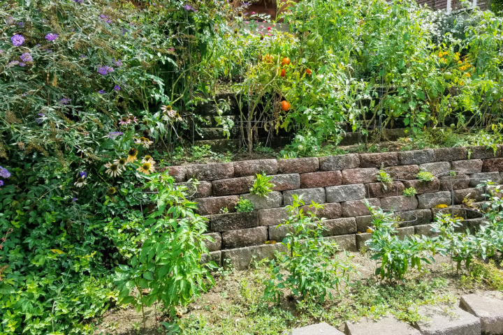 Terraced garden peppers and tomatoes and pollinating plants