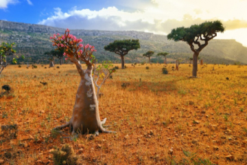 Socotra Island, Archipelago Yemen