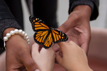 PWM-teacher-student-releasing-monarch