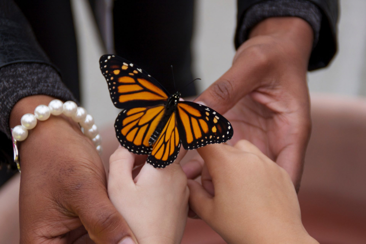 PWM-teacher-student-releasing-monarch