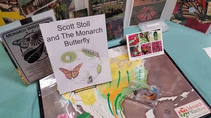 Science-Fair-Monarch-Biology