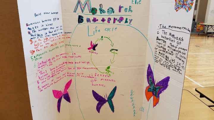 Science-Fair-Monarch-Butterfly-Study