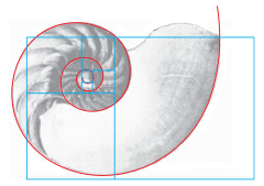 An illustration of Fibonacci Spiral's, the Golden Rectangle and a nautilus shell on top of each other.