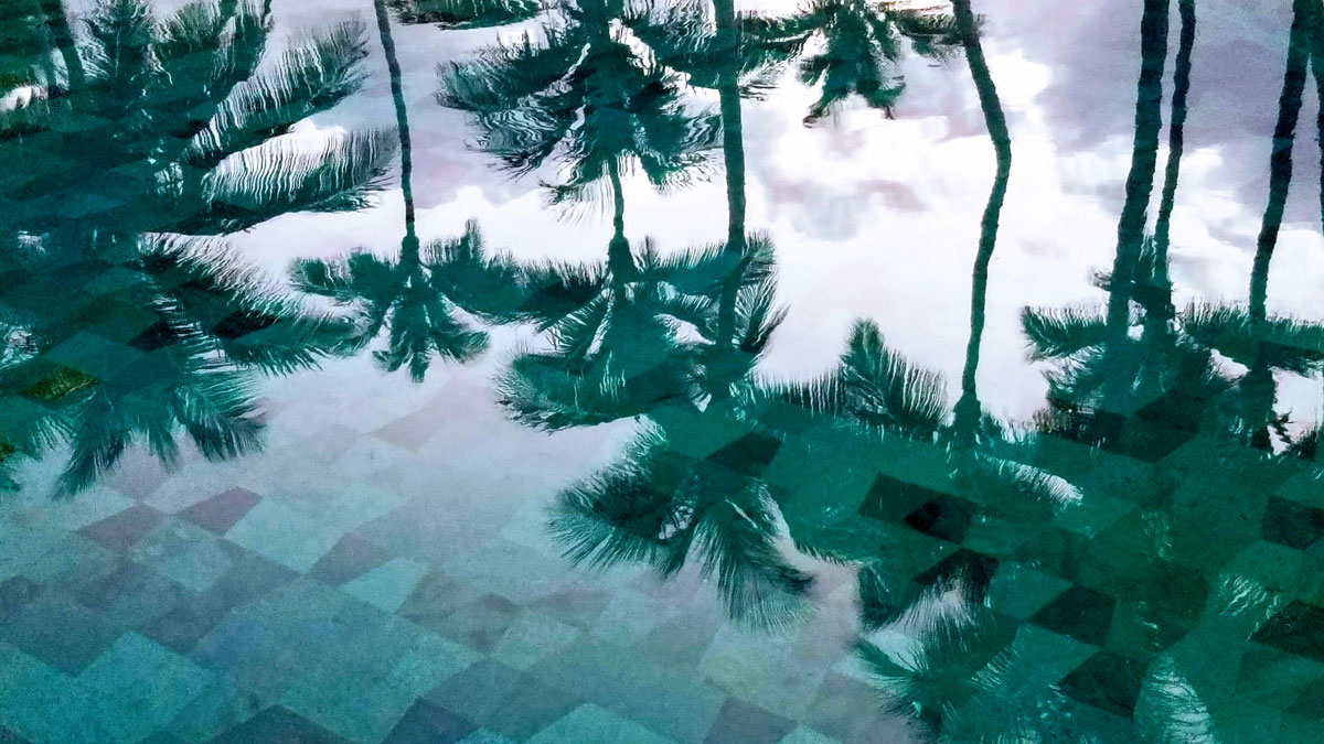 Palm tree reflections in the pool at the Ritz Carlton, Puerto Rico.