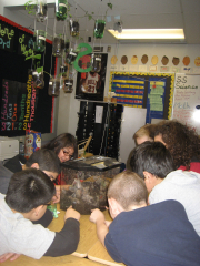 Students examining some red worms up close
