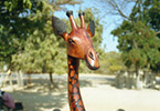Giraffe sculpture and bicycle.